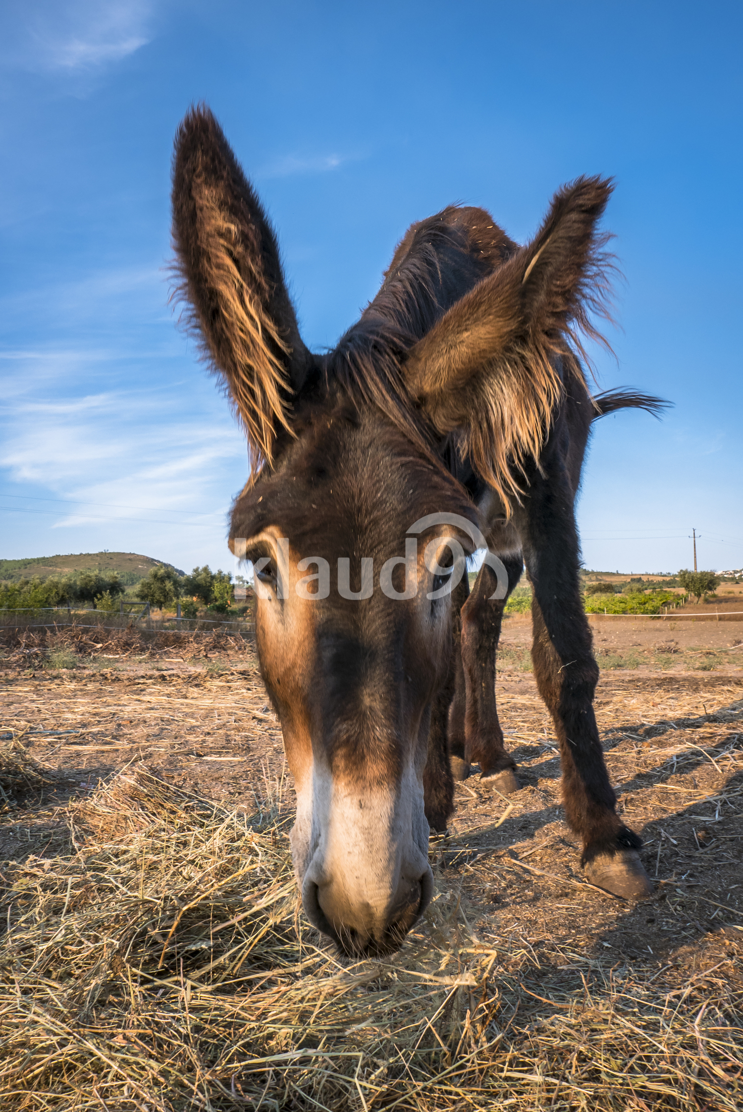 Muzzle donkey