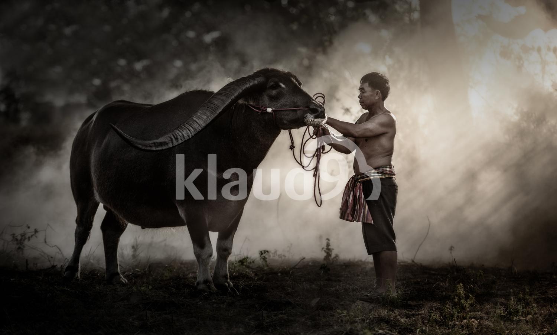 Thai Farmer with buffalo