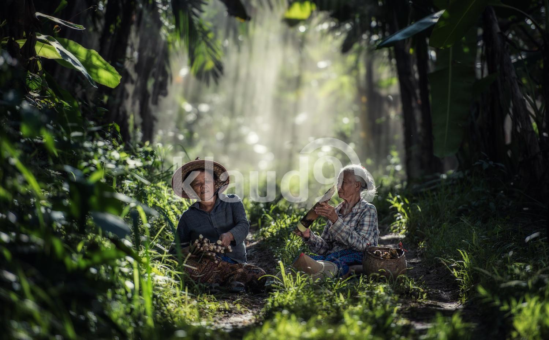 Thai elderly woman working in the rainforest