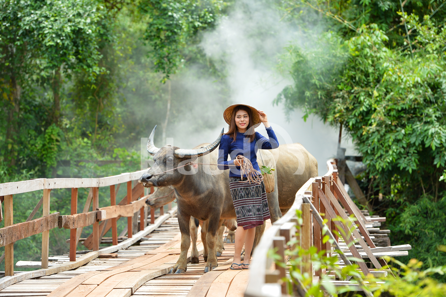 Thai woman walking to the fields with her Ox