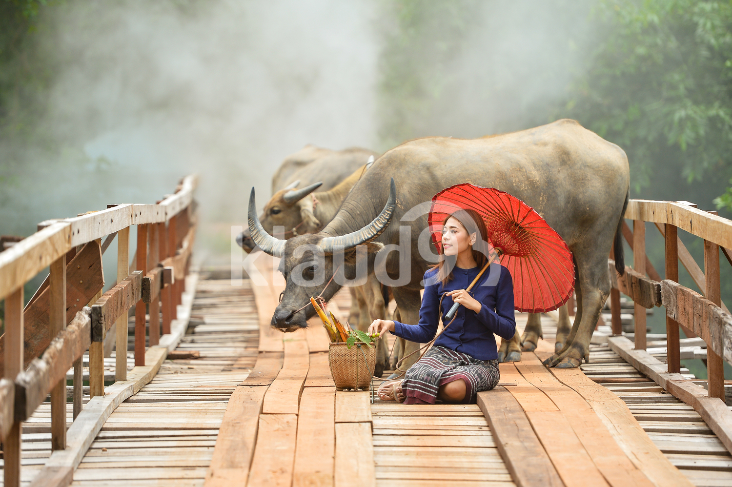 Thai woman on a bridge with her Oxes