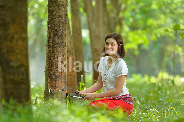 Female rubber tapper in Thailand