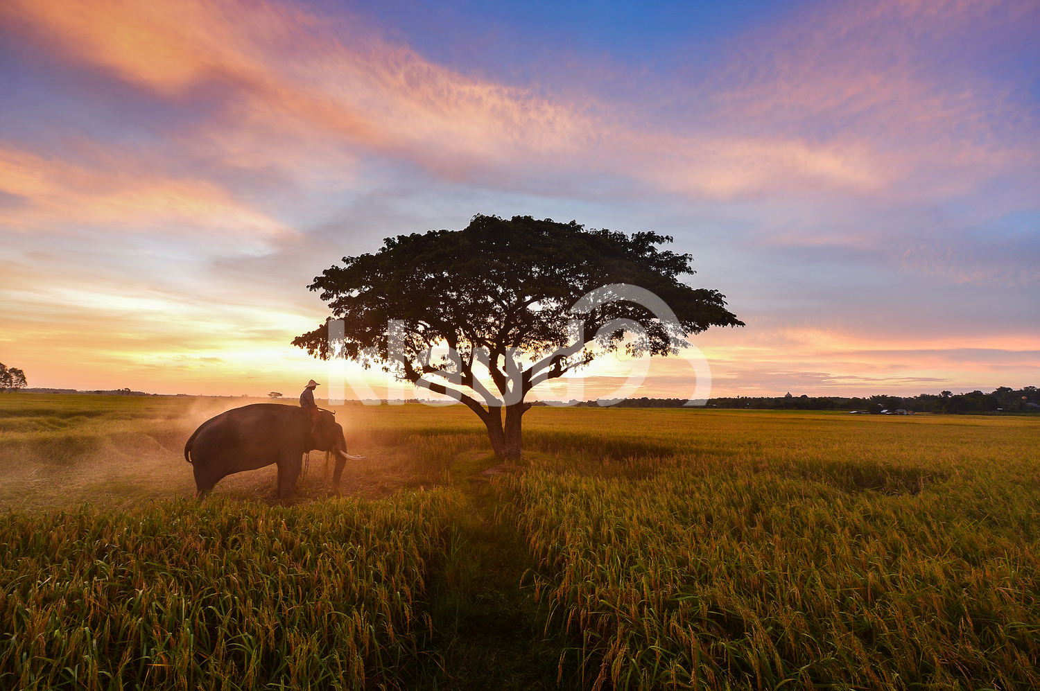 Farmer and elephant during sunrise in the fields