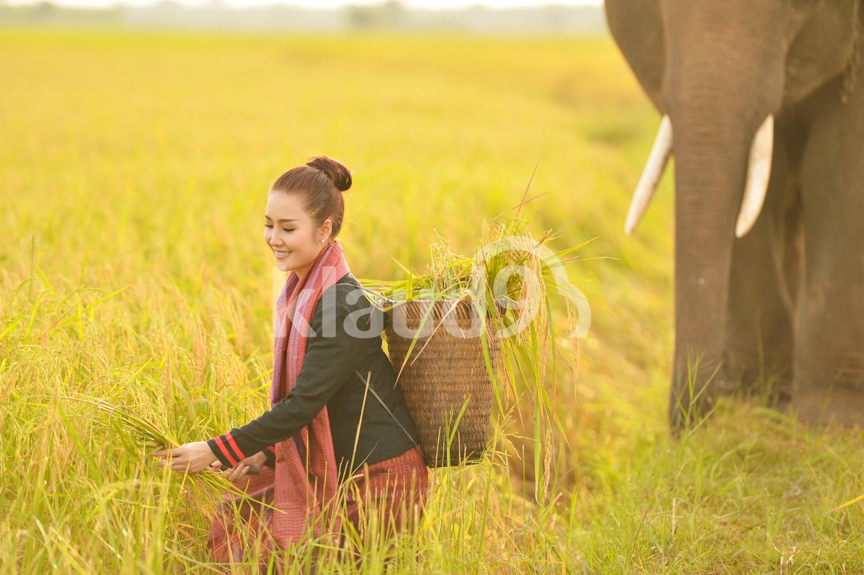 Beautiful Thai farmer with her elephant