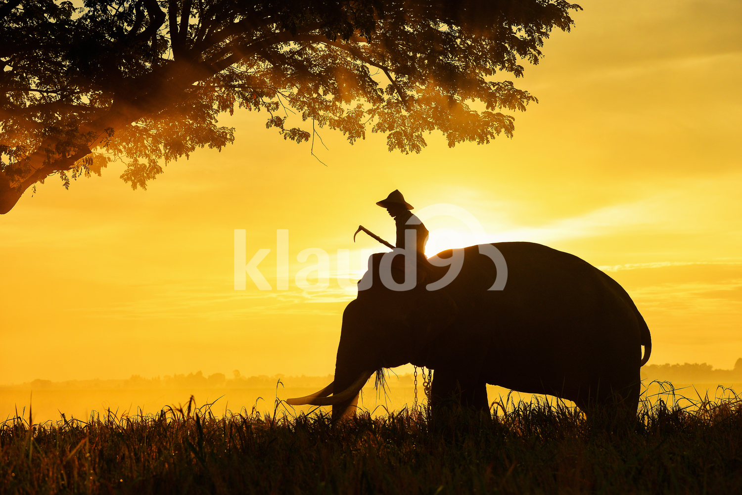Silhouette of Elephant and a farmer in the fields