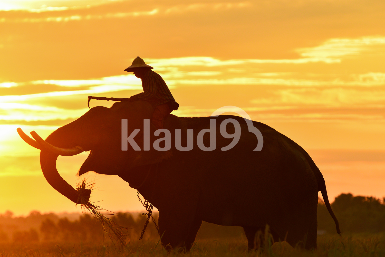 Silhouette of Mahout and Elephant in Thailand