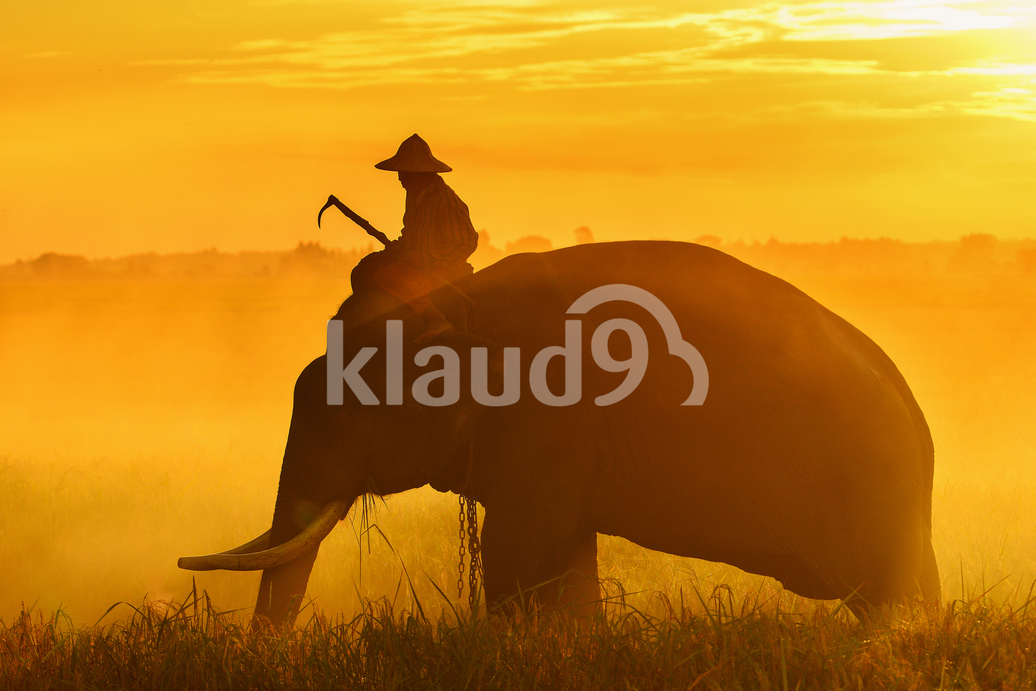 Silhouette of an Elephant and man in Thailand