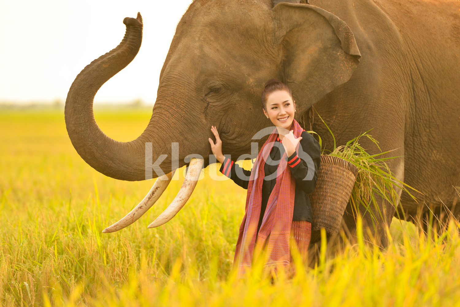 Woman and elephant in the rice fields