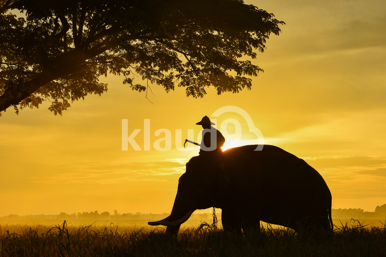 Silhouette of an Elephant and farmer in Thailand