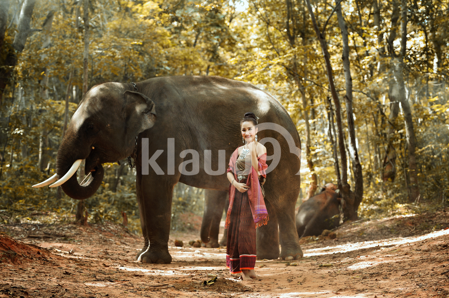 Beautiful Thai woman and elephant in the forest