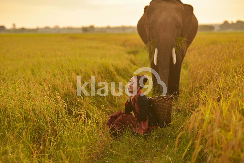 Thai farmer with elephant during sunset
