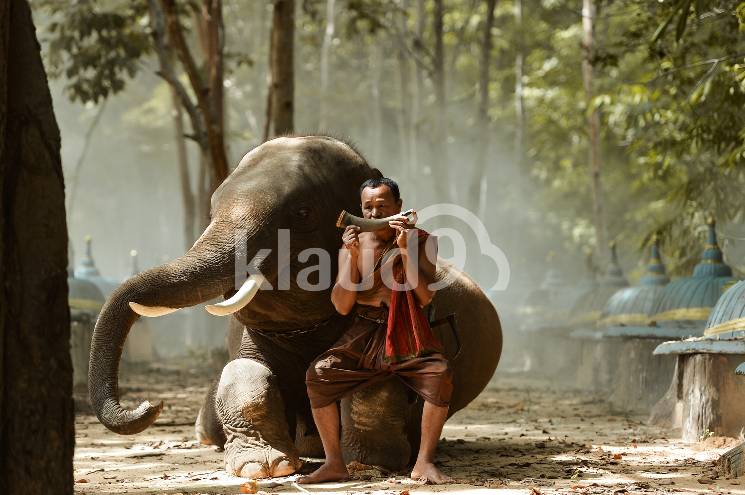 Elephant and villager in Surin, Thailand