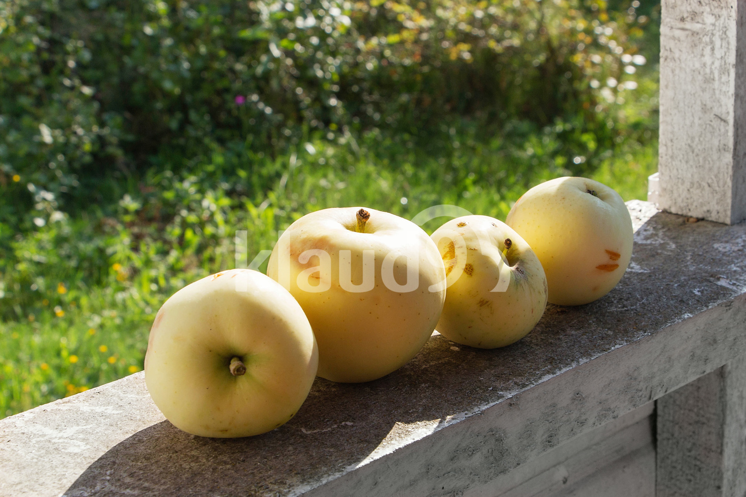 Apples on an old rough wooden porch