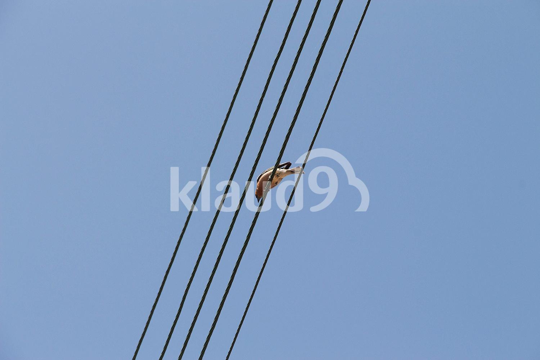 bird sitting on wires