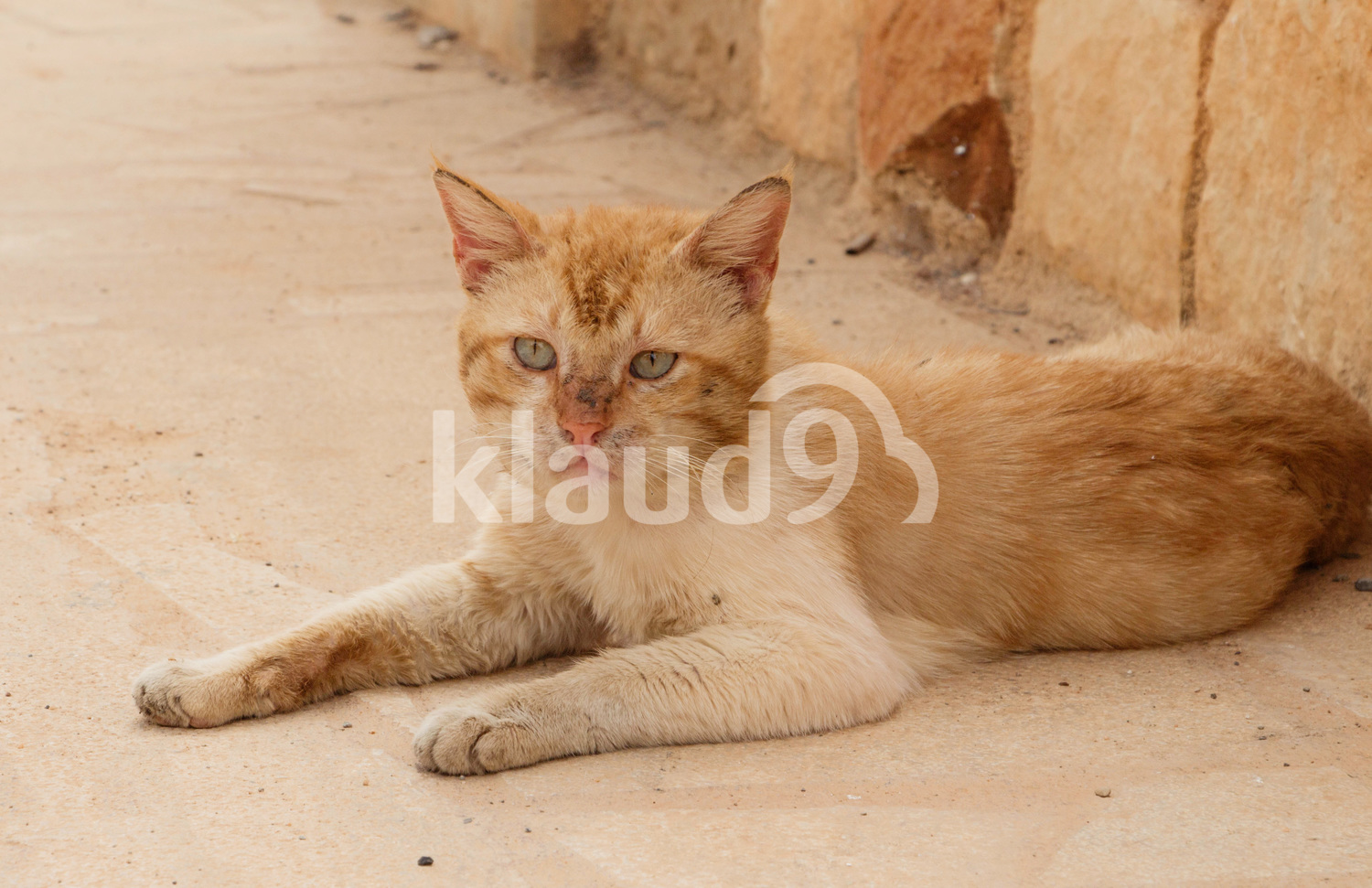 Cute red homeless cat lays on the trail