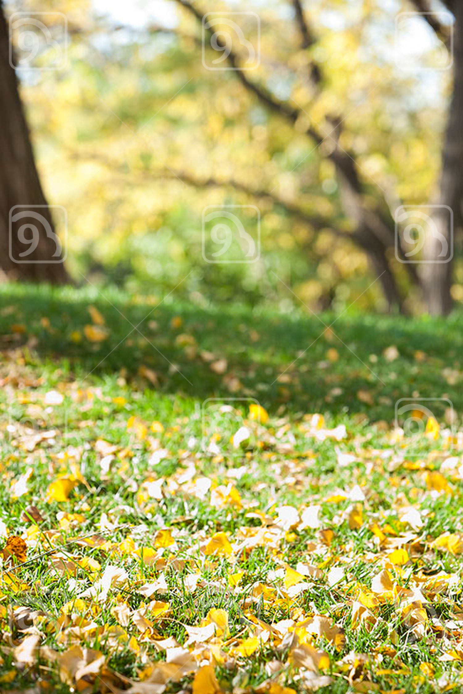 Grass, trees and leaves in Autumn