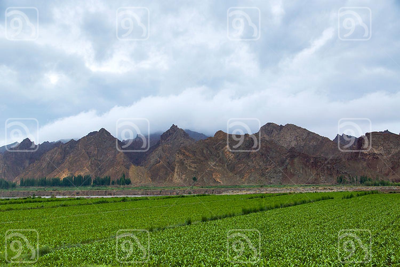 Farmland and mountain range