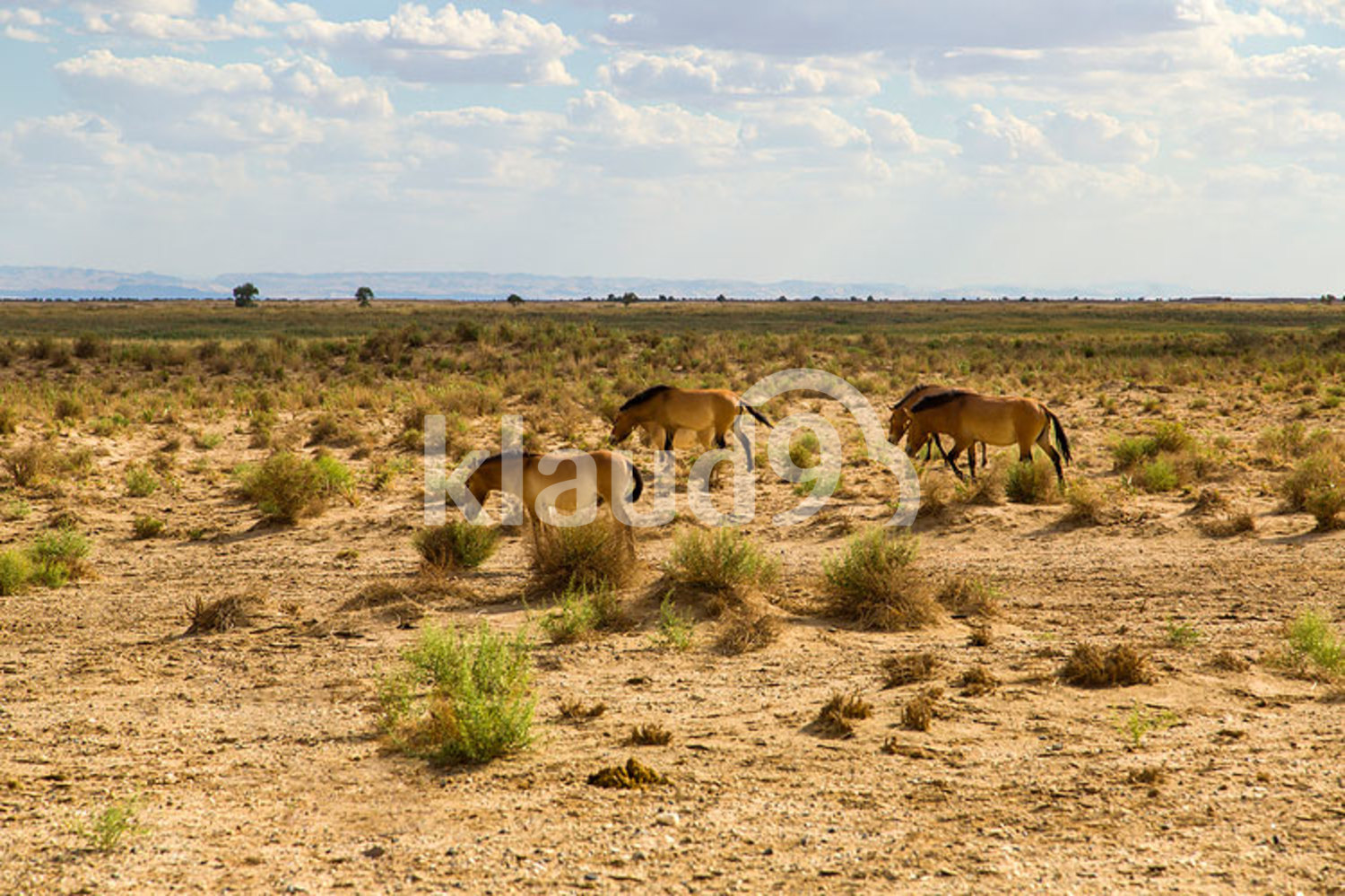 Horses grazing in ecological reserve