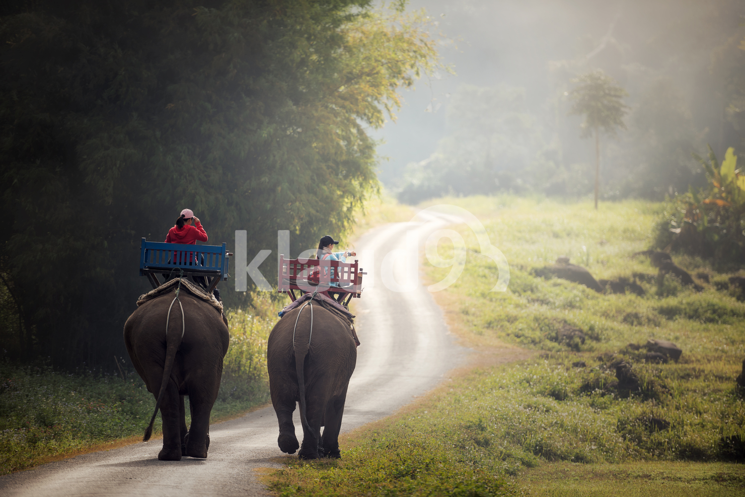 Elephants trekking through jungle with tourists on them