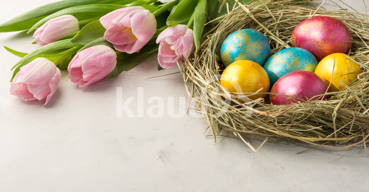 Easter eggs in a straw nest, Easter bunny cookies and  tulips on the white background