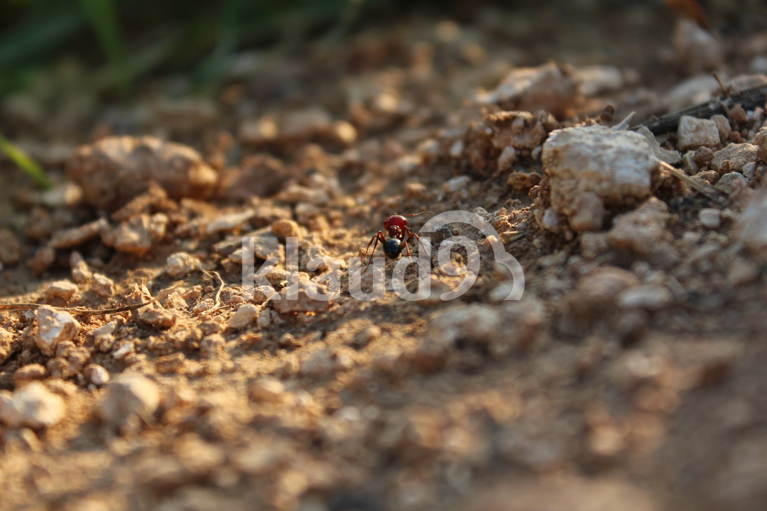 An ant in focus