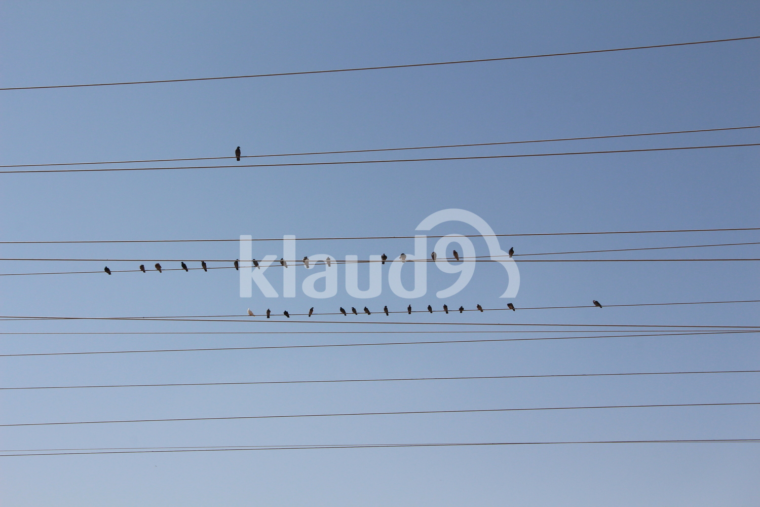 Birds on an electricity wire