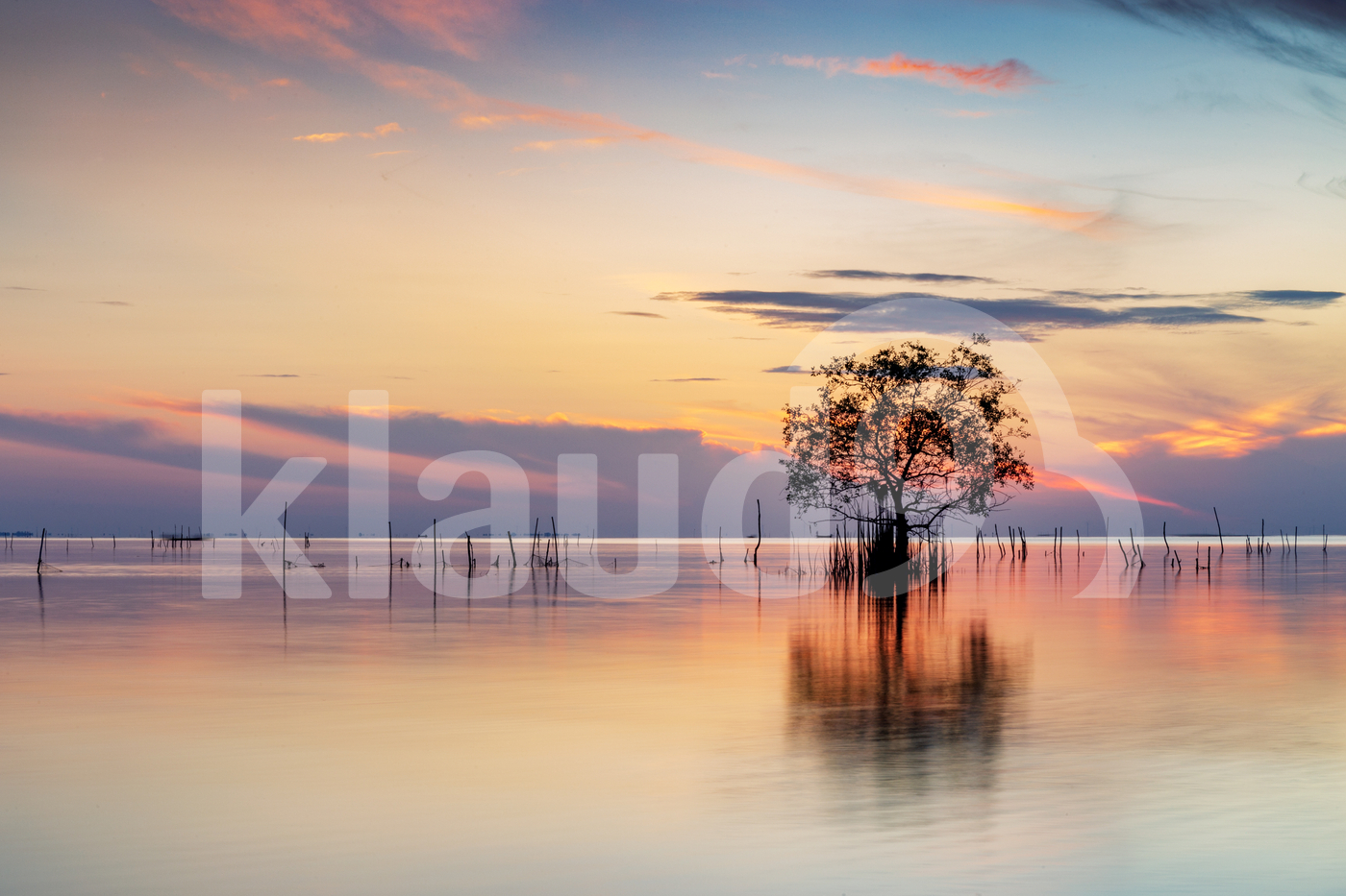 A tree on the lake at sunrise