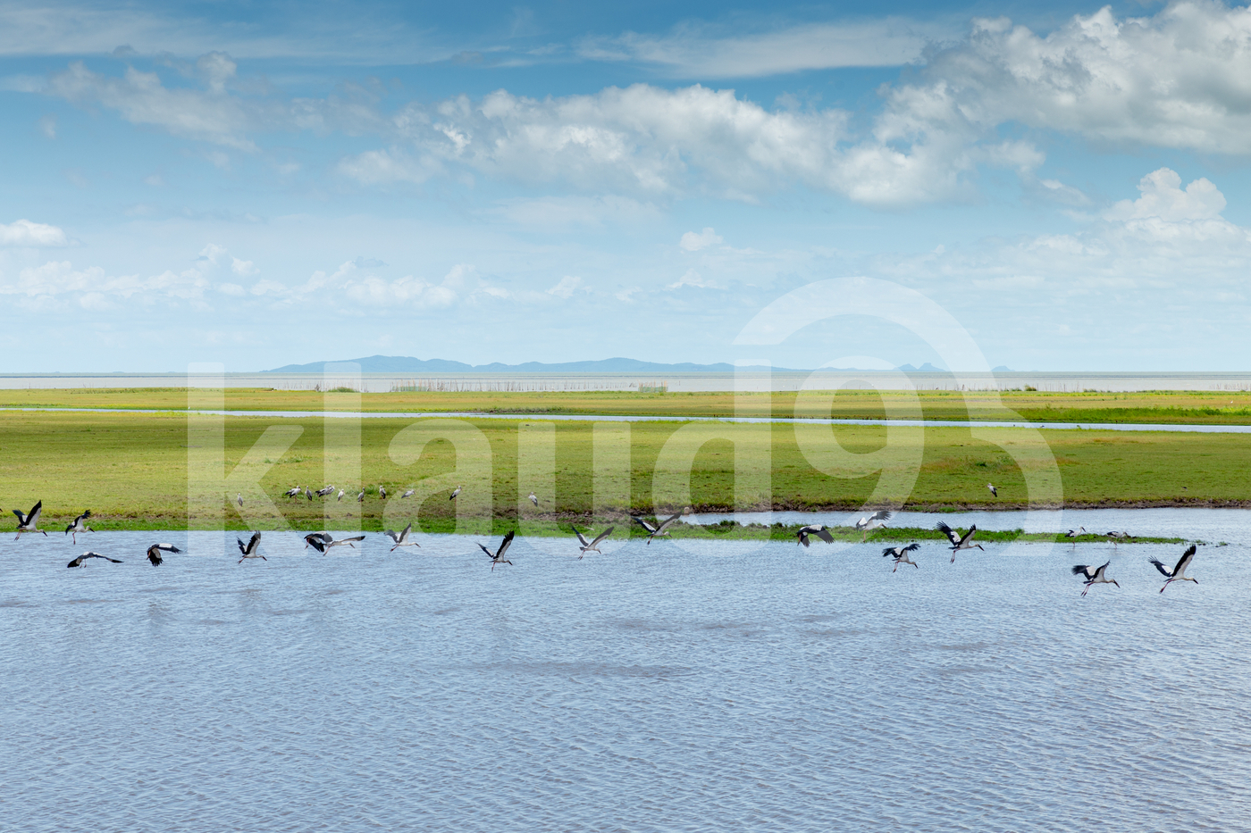 Birds at flying above the water